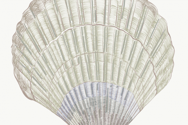 2019 05 24 marianne venderbosch shell drawing